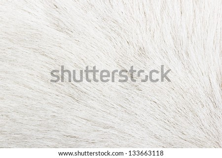 White fur texture close-up background - stock photo