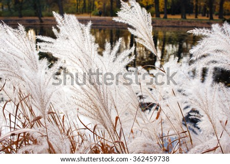White furry plants which look like snow