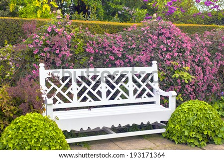 White garden bench with topiary shrubs and pink clematis. - stock photo