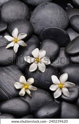 white gardenia flowers on  black pebbles - stock photo