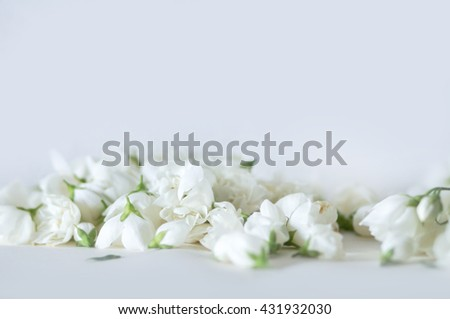 White gentle flowers background, selective focus, shallow depth of view, daylight