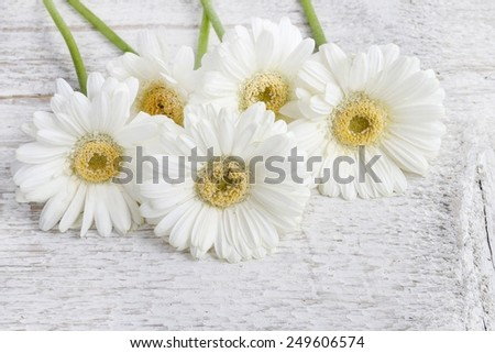 White gerbera daisies on wooden background, copy space - stock photo