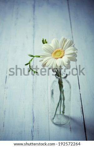 White gerbera flower in a vase on wooden background, simple composition - stock photo