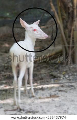 White goat on the shooting range - stock photo