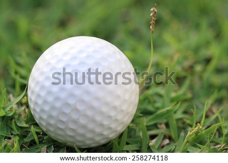 White golf ball on course green grass field background - stock photo