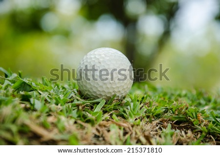 white golf ball on   grass