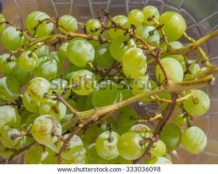 White grape (Vitis vinifera) fruits healthy vegetarian food - stock photo