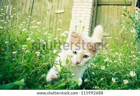 White green-eyed cat behind grass - stock photo