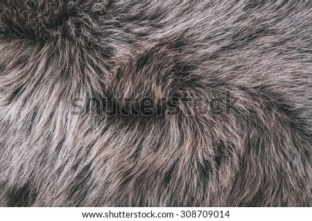 White Grey, Dark Brown Wolf Fox Fur Natural, Animal Wildlife Concept and Style for Background, textures and wallpaper. Close up Full Frame. - stock photo