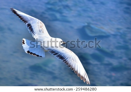 white gull flying over the water - stock photo