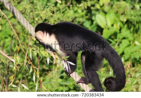 white headed capuchin and operation clean sweep Donald mcclintock edit history talk (0) share initiate operation clean sweep to keep the virus secret and advance his weapons villains wiki is a fandom tv.
