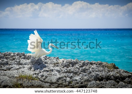 Cozumel Stock Images Royalty Free Images Amp Vectors