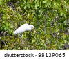 White heron with extraction on a tree - stock photo