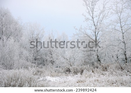 White hoarfrost covering all trees and black raven - stock photo