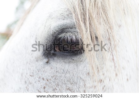 White horse eye - stock photo