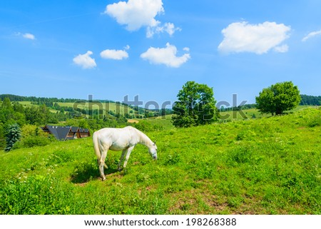 White horse grazing on green meadow, Pieniny Mountains, Poland