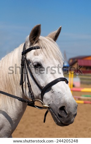white horse head close up  - stock photo