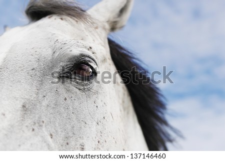 white horse head cut - stock photo