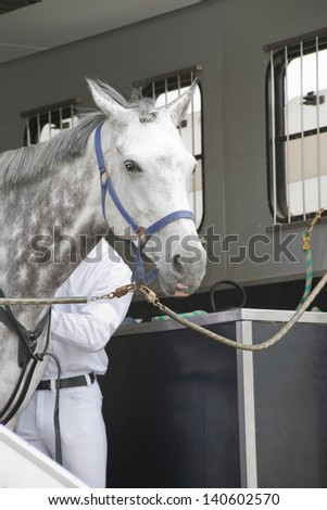 white horse in a horse truck - stock photo