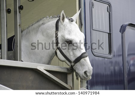 white horse in a horse truck trailer - stock photo