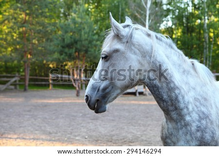 White horse in a paddock on a clear summer day - stock photo