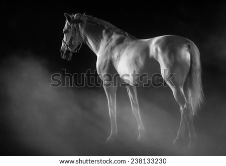 White horse in a sublime setting with fog over a black background. - stock photo