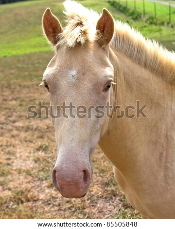 White horse in fenced pasture land