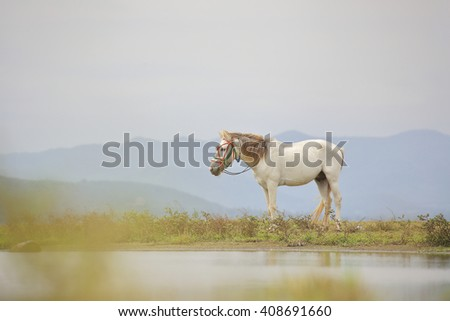 White horse in nature - stock photo