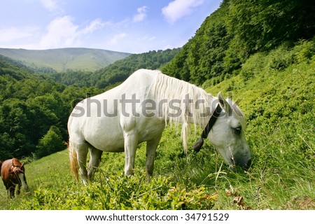 White horse in the Carpatian Mountains