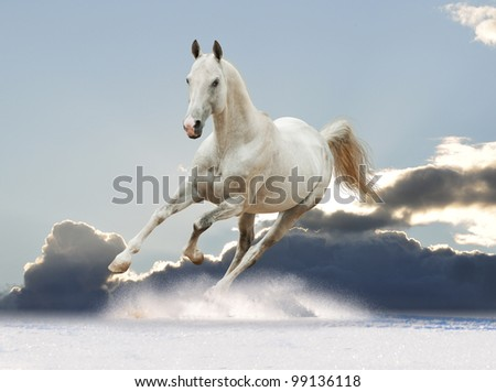 white horse in the sky - stock photo