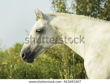 white horse is on a green field under a gray sky
