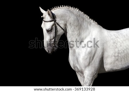 White horse isolated on black background - stock photo