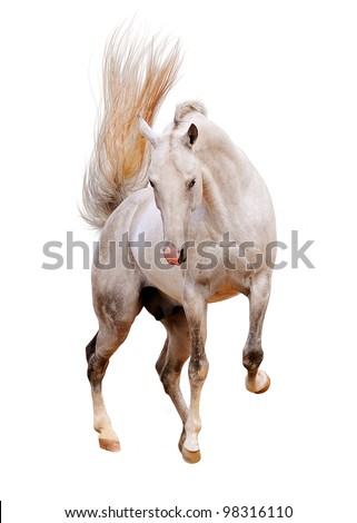 white horse isolated on white - stock photo