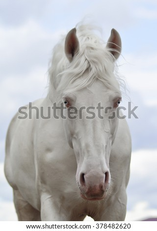 white horse on a background of blue sky with clouds
