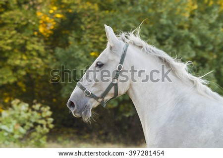 white horse on a background of trees with green leaves