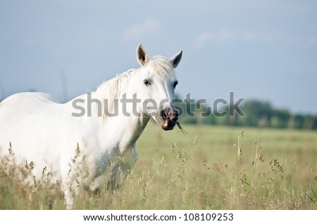 white horse on flower meadow