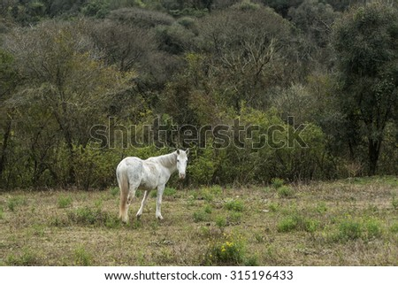 white horse on grass looking at camer with background of forest