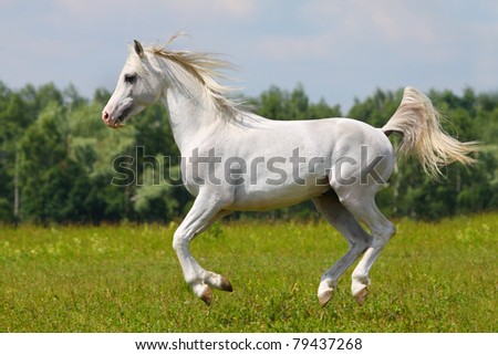 white horse on nature