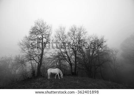 white horse on the meadow, shrouded in fog, Dilijan, Armenia - stock photo