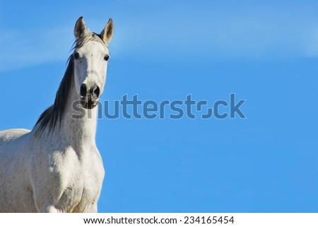 White horse on the sky. Equestrian concept. Copy space - stock photo