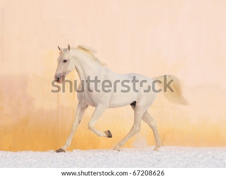 white horse on the winter background