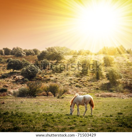 White horse pasturing in a rural landscape under warm sunlight - stock photo