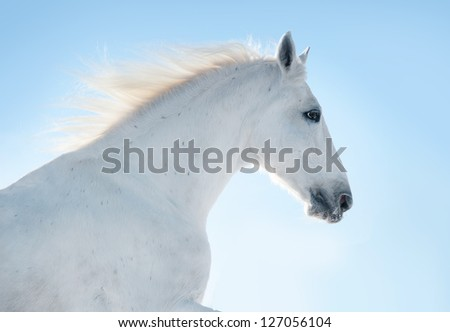 white horse portrait against sunlight in blue sky - stock photo