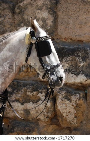 White horse pulling a cart - stock photo