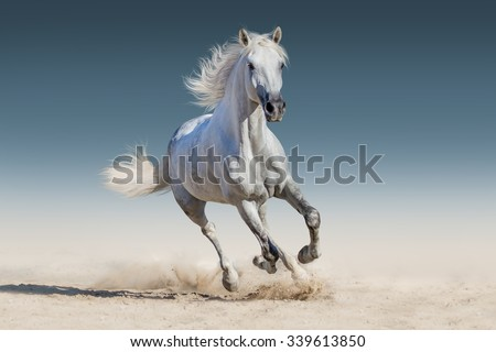 White horse run gallop - stock photo
