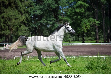 white horse running on a field - stock photo