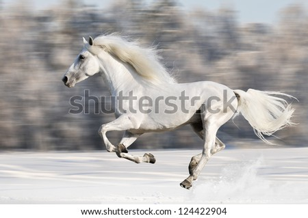 White horse runs gallop in winter, motion blur - stock photo