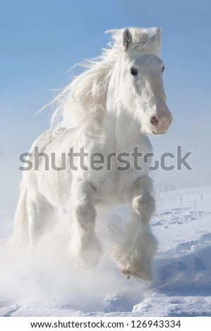 White horse runs gallop in winter on sky background - stock photo