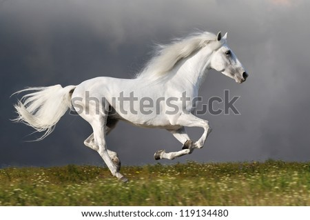 White horse runs gallop on the dark sky background - stock photo