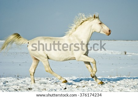 white horse runs in the snow field on a background of blue sky